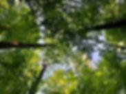 canopy%20with%20sunshine%202_edited.jpg