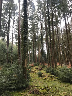 Waldstimmung Wermatswil 21.jpg