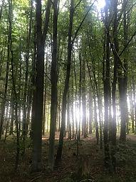Wald Wermatswil
