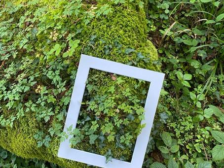 Waldgesundheit / Waldbaden Sept 21
