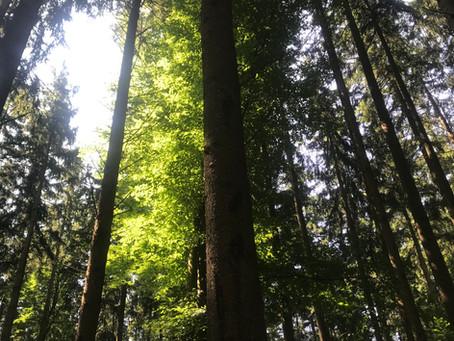 Ausbildung zum Wald-Gesundheitstrainer 2021