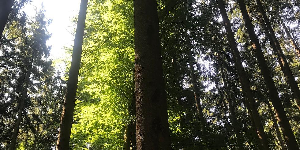 NEU: Wald-Gesundheit / Waldbaden