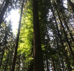 Waldstimmung individuell Wörishofen 21.jpg