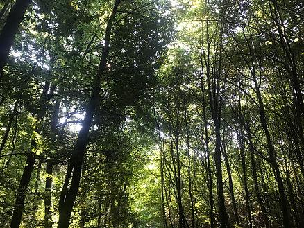 Wald 2020.jpg