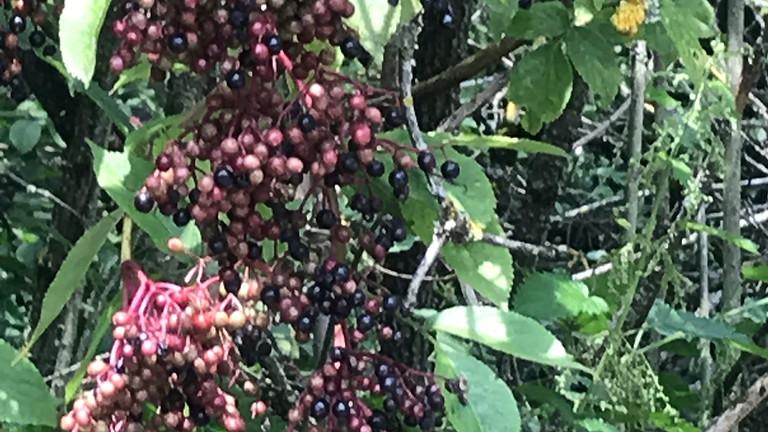 Kräuterspaziergang: Waldkräuter & Wildfrüchte
