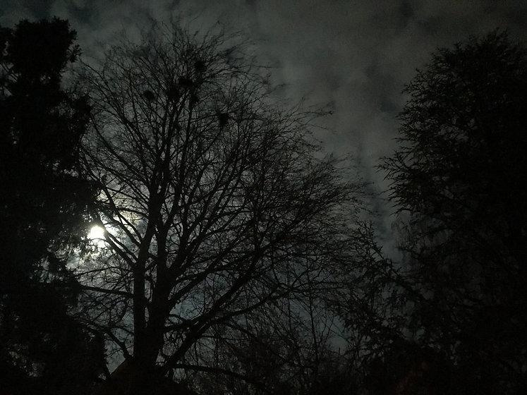 Wald_Nacht.jpg