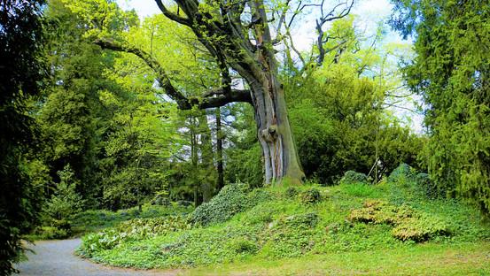 Král stromů v NPP Park v Bílé Lhotě si neustále povídá se svými přáteli