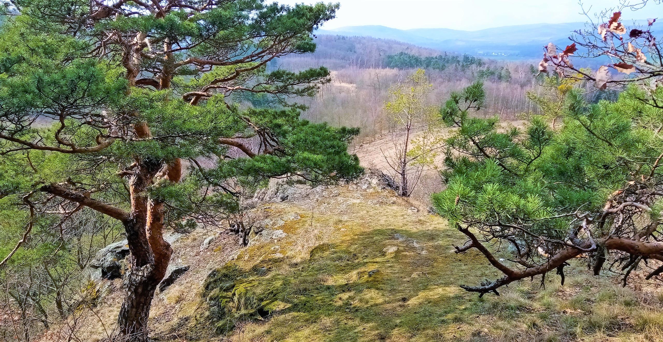Zákoutí Radechovských skal
