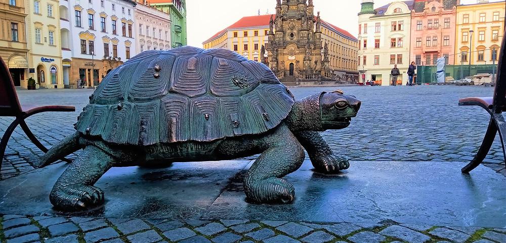 Želva z moderní Arionovy kašny na olomouckém Hořejším náměstí