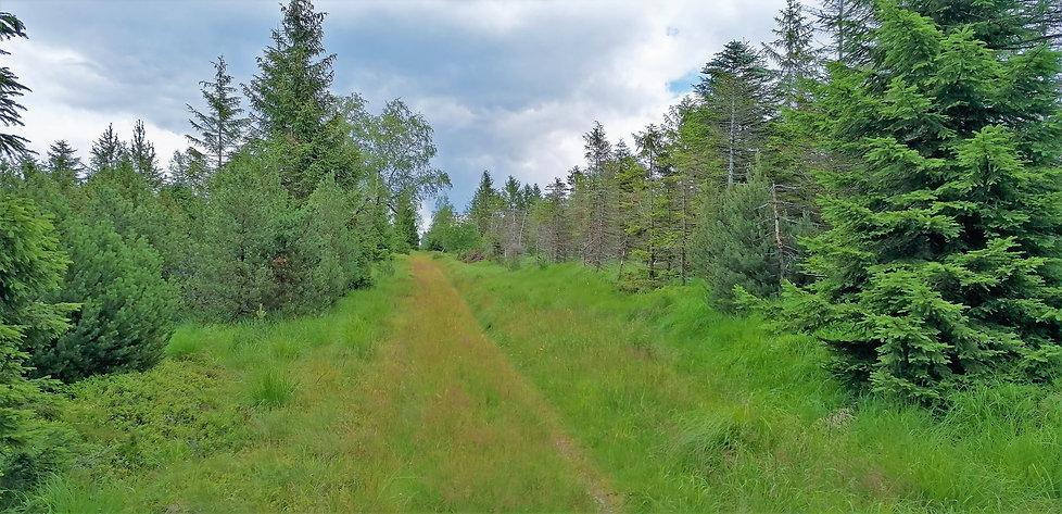 Přírodní rezervace U Jezera - Cínovecká