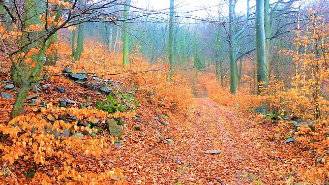 Staré hornické trasy v revírech Krupky