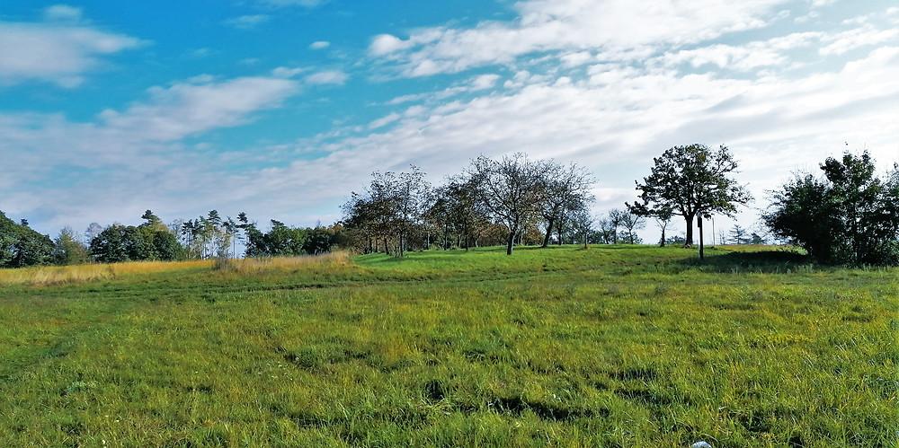 PP Na Popovickém kopci chrání hlavně teplomilné rostliny