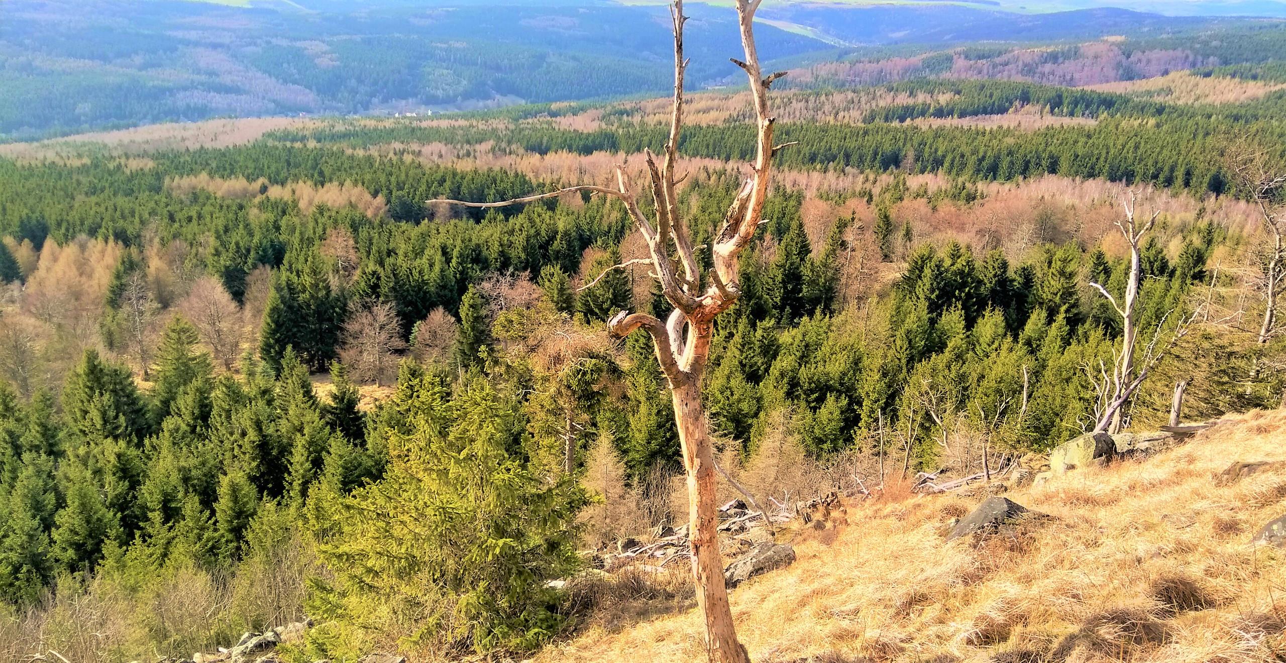 Na vrcholu Jelení hory