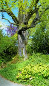Pohádkové zákoutí v arboretu Bílá Lhota
