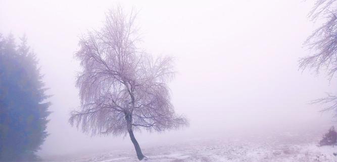Galerie: Tvary a podoby krušnohorské zimy