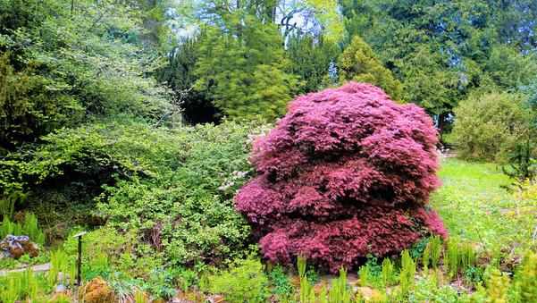 Na jaře rozkvete bělolhotské arboretum množstvím barev