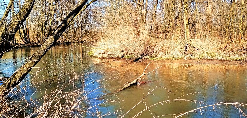 PR Plané loučky se nachází těsně před Olomoucí, kde je ještě tok Mlýnského potoka neregulovaný