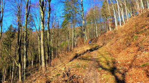 Nálada v údolí Trusovického potoka na Olomoucku