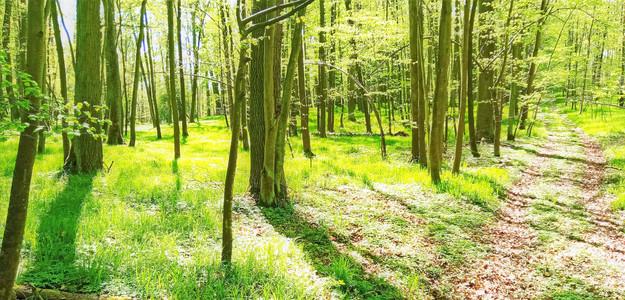 Tráva je tak šťavnatá, že ji slunce prosvěcuje jako roentgenem