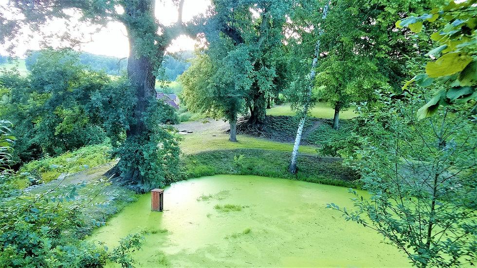Zákoutí Tyršova dubu a rybníčku v Předsl