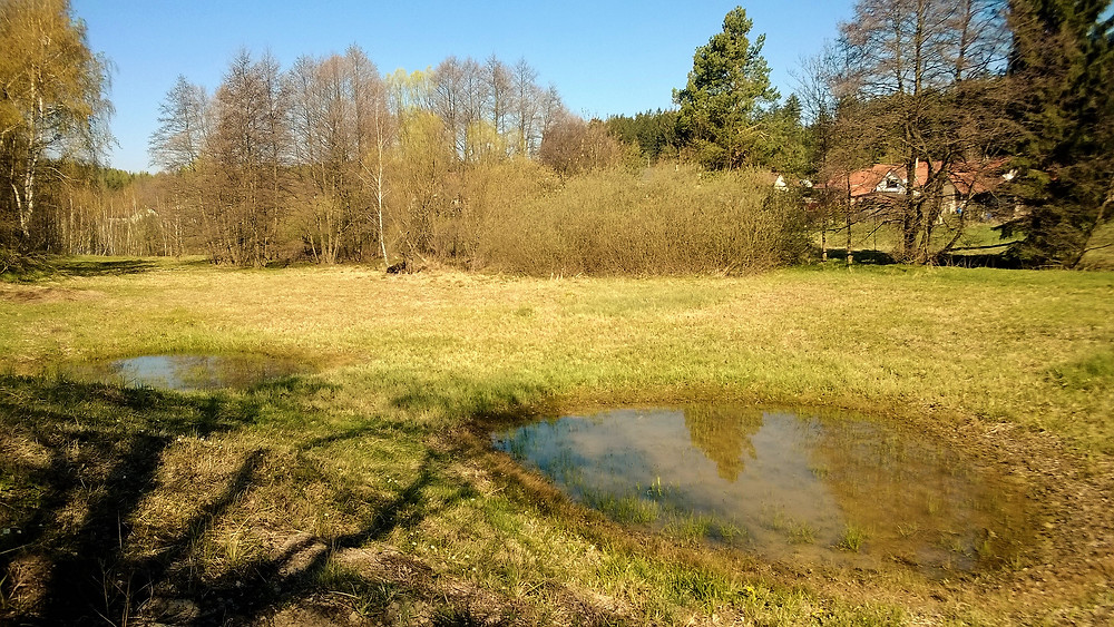Přírodní památka Pohorská louka