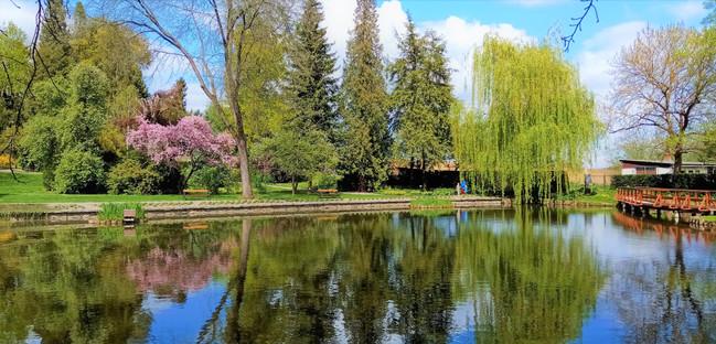 Zrcadlení pučících stromu na hladině jezírka v bělolhotském parku