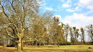 Kouzlo stromů v chudobínském parku