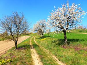 Jarní krása rozkvetlé cesty