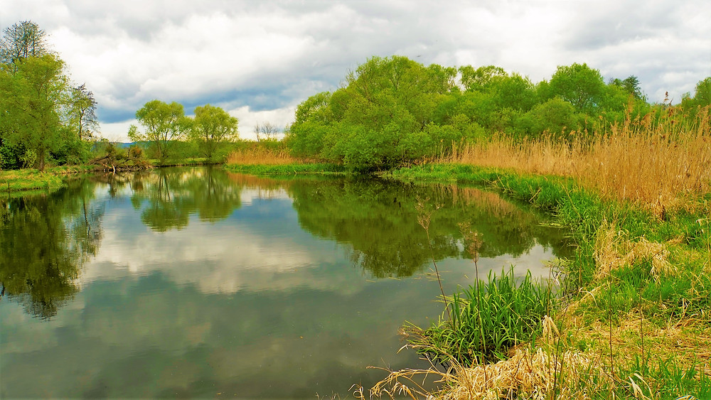 ´´Tý líný řeky proud...,´´ zazpíval by si člověk hned při pohledu na řeku Moravu v PP Za Mlýnem