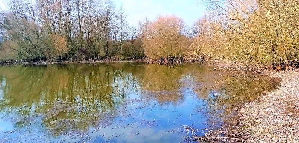 Přírodní rezervace Sedlec