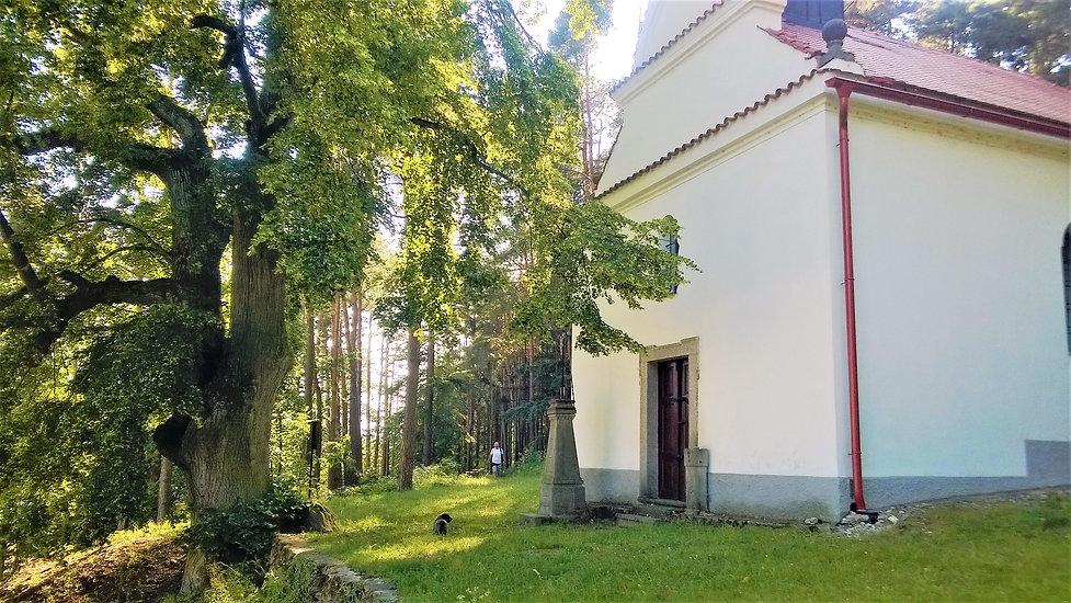 Lípa u Kaple svaté Anny v Břežanech.jpg
