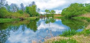V lokalitě PP Za Mlýnem předvádí řeka Morava jedny z nejkrásnějších meandrů na svém toku