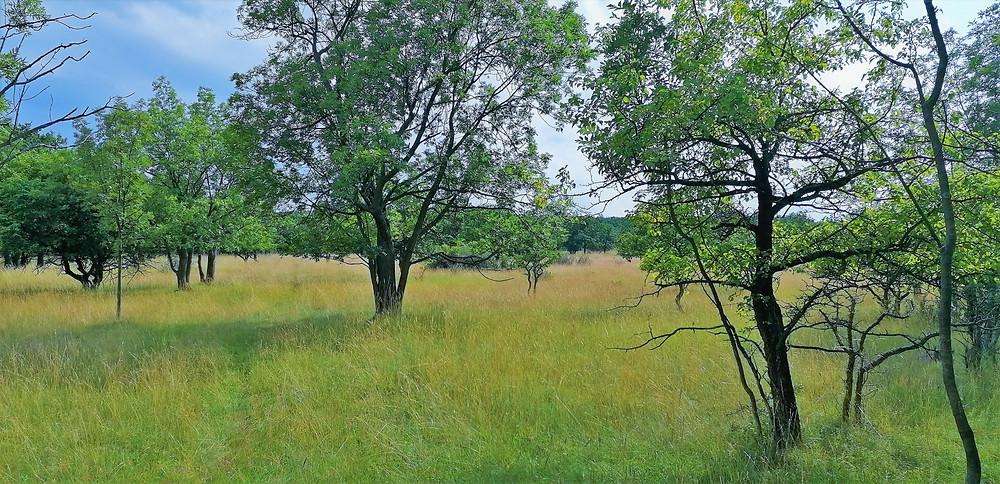 V PR Dětanský chlum najdeme na náhorní plošině teplomilné suché trávníky s teplomilnými stromy