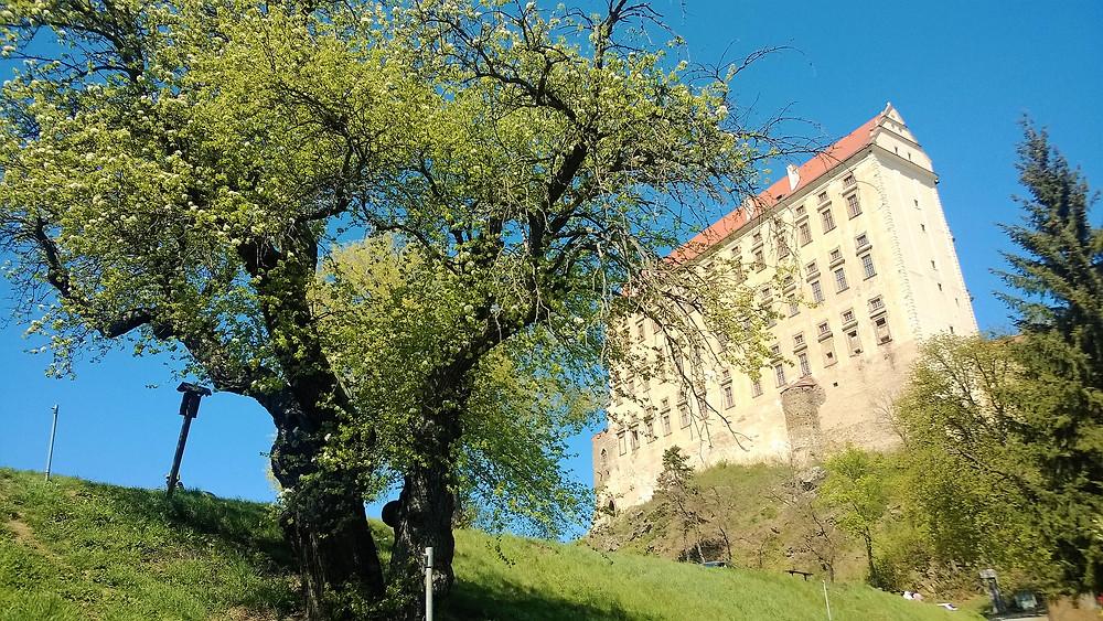 Památná Hrušeň u Podhradského rybníka a na pozadí zámek Plumlov
