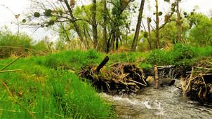 Všudypřítomná voda, čerstvá tráva, umírající stromy a parazitující jmelí - PP Za Mlýnem