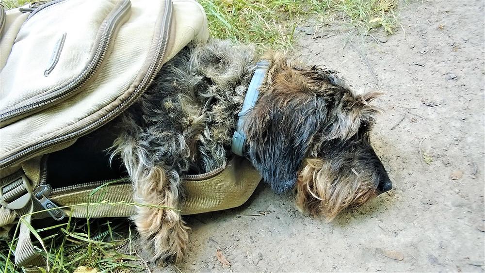 Tato část Českého bedekru je věnována nejúžasnějšímu psovi, jakého jsem kdy měl. Je mě líto, že si mě už opustila Aki.