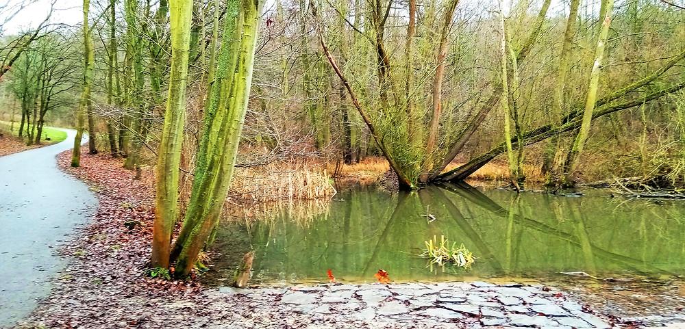 Jezírko je první věcí, na kterou návštěvníci parku Na Cibulce narazí