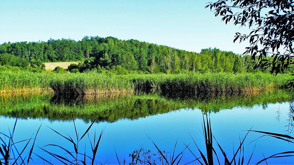 Přírodní rezervace Vidnavské mokřiny je