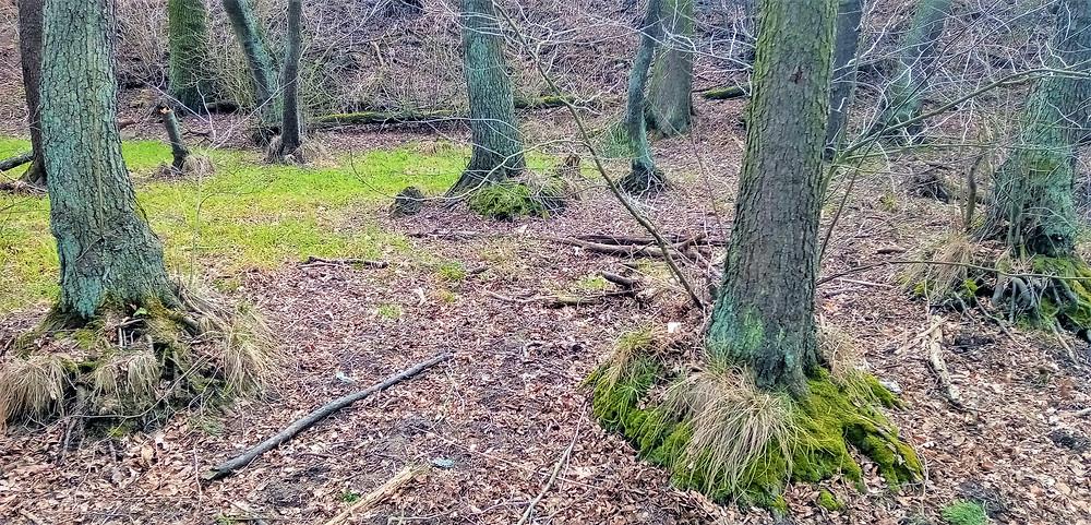 Kořenové náběhy některých stromů ještě dokazují, že původně stály na hrázi rybníka Hol