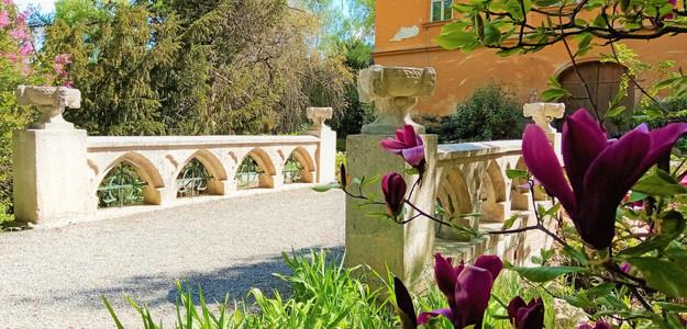 Rozkvetlé magnolie dnes drží čestnou stráž u mostu