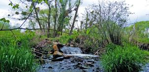 Lužní lesy kolem řeky Moravy zatím nabízejí dostatek vláhy, a to i v Přírodní památce Za Mlýnem