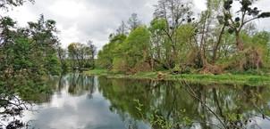 Lužní les v lokalitě Přírodní památky Za Mlýnem