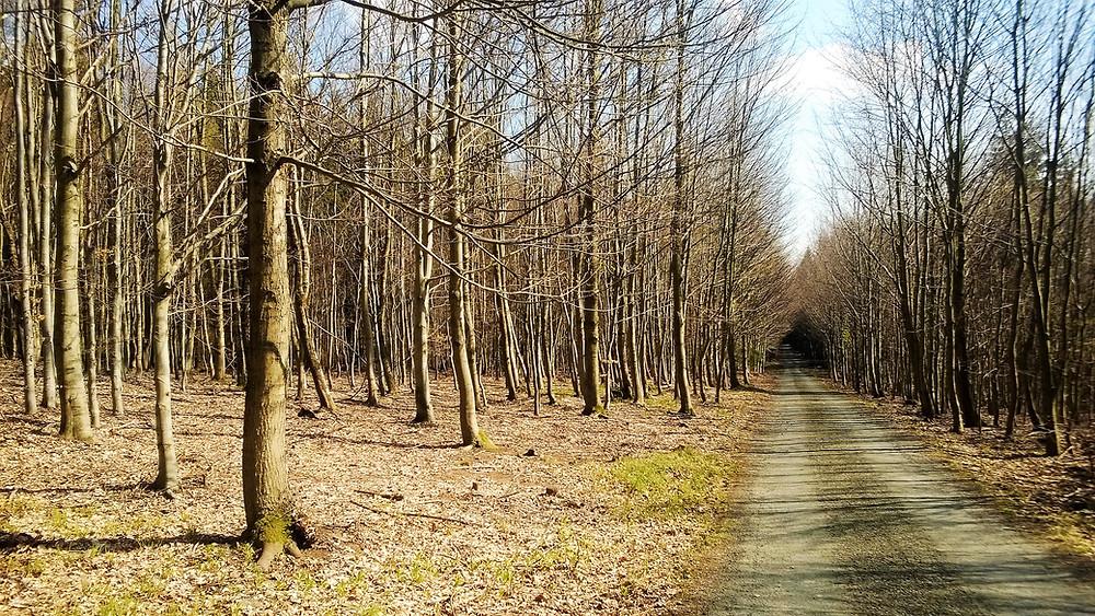 Přírodní rezervace Skály v dubnovém slunci