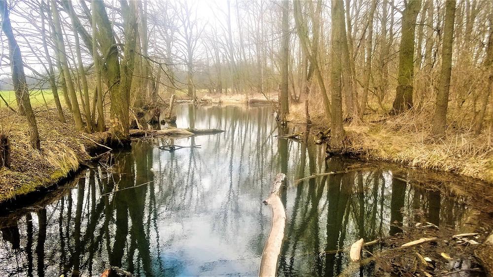 Tok bývalé řeky Cholinky v PP Častava