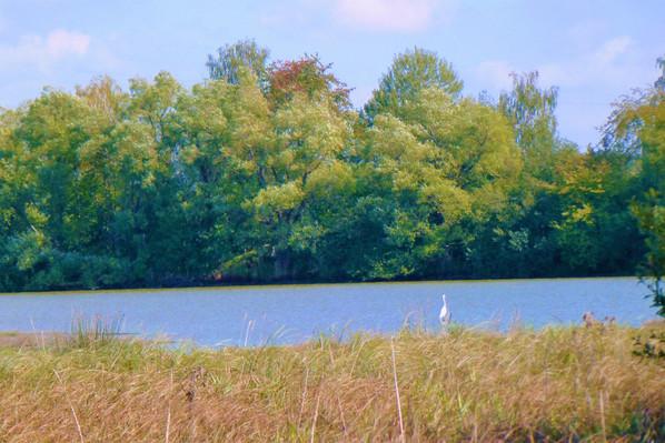 Galerie: Ptačí ráj - rezervace Mělký rybník