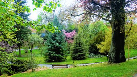 Výhodou arboreta v Bílé Lhotě je jeho stupňovitý terén