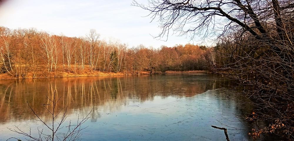 Rybník Barbora v Xaverovském háji