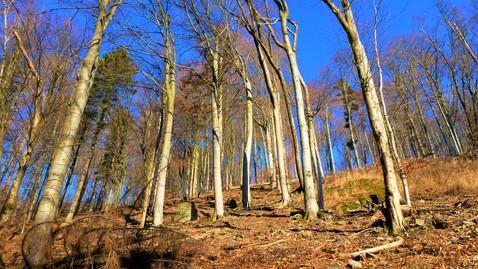 V lesích nad svahy Trusovického potoka dominují buky
