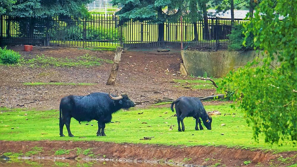 V Podkrušnohorském zooparku