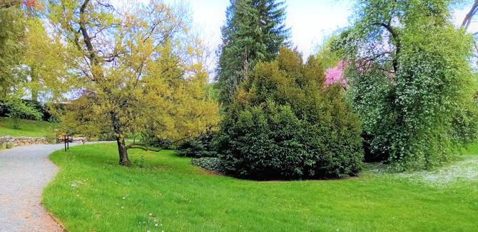 Jedno ze zákoutí bělolhotského arboreta